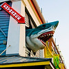 Great White Shark (Ocean City Boardwalk)