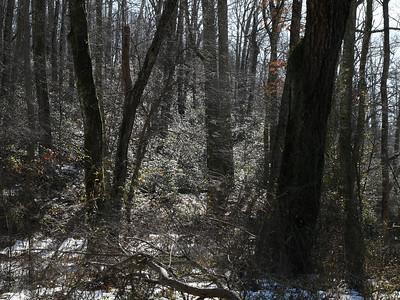 Seneca Creek State Park (winter scene)