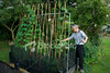 <a href=http://www.istockphoto.com/file_closeup/object/4284465.php?id=4284465&refnum=apsimo1 target=istock>Man waters beans</a><br>A gardener waters his homegrown runner beans