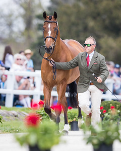 Buck Davidson and Jak My Style in the First Inspection 4.24.19.
