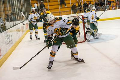 Hockey Bears  vs Cougars