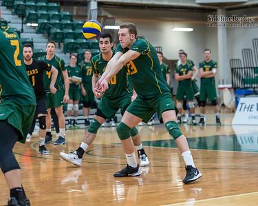Volleyball - UofA Golden Bears vs UofC Dinos