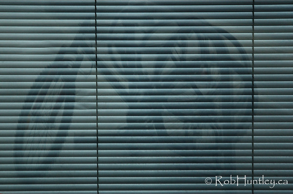 Venetian bike. Reflection of a bicycle chained to a bicycle rack in the venetian blind backed windows of an office building on Elgin Street in Ottawa.  © Rob Huntley