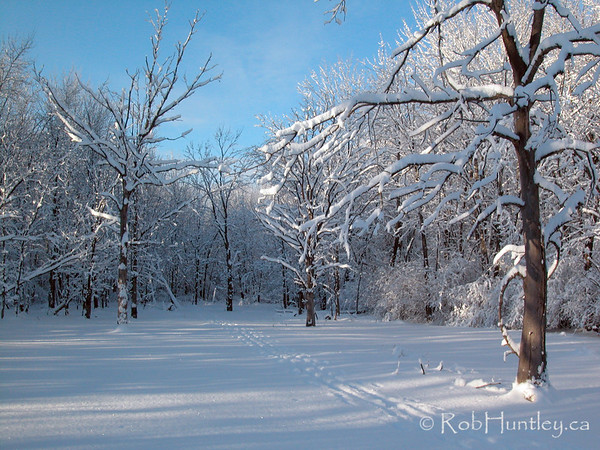 Winter Landscape Ottawa - Cross Country ski trail © Rob Huntley