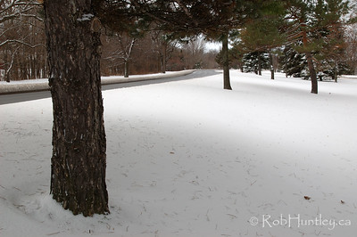 The Ottawa River Parkway, the eastbound lanes, shot from the park-like median between the two directions of traffic. This is following the first snowstorm of the season. © Rob Huntley