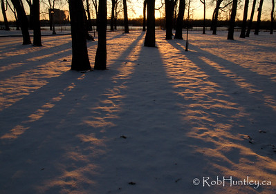 Long tree shadows at sunrise on Bate Island in the Ottawa River. This is a park area accessible from the Champlain Bridge. © Rob Huntley