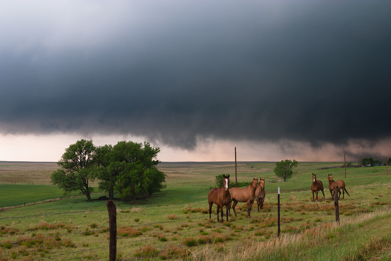Horses look on as a dangerous supercell rotates rapidly near Quinter, KS, on May 23, 2008. About 20 minutes later, this developed into a large, damaging tornado.
