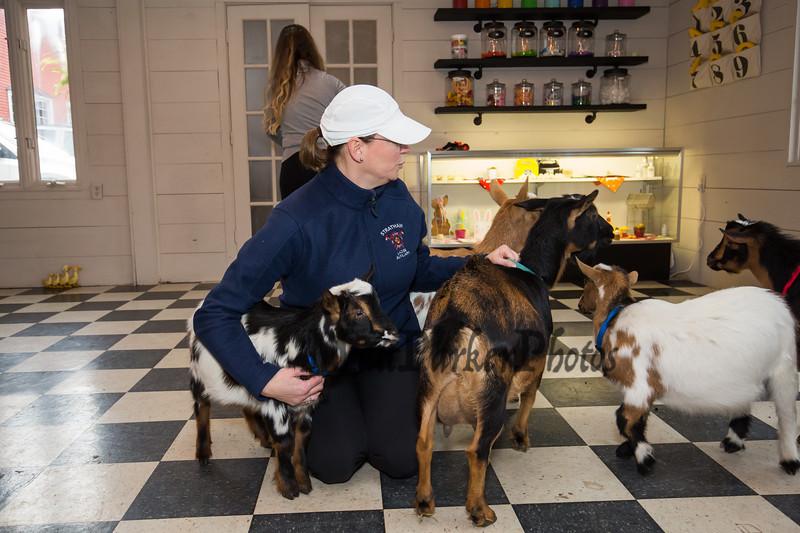 "Legacy Lane Farm ""Goat Yoga"" with Jordan Taylor Wellness and ""Dotty's Goats"" on Tuesday 11-5-2019 @ Stratham, NH.  Matt Parker Photos"