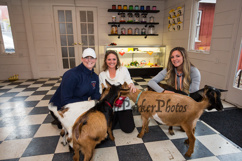 "Legacy Lane Farm ""Goat Yoga"" with Jordan Taylor Wellness and ""Dotty's Goats"" on Tuesday 11-5-2019 @ Stratham, NH.  Matt Parker Photos"