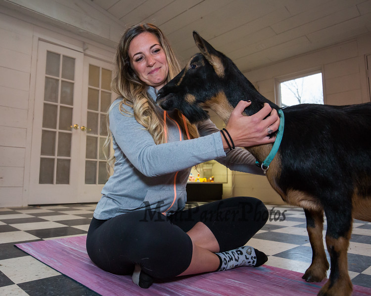 """""""Goat Yoga"""" instructor Jordan Taylor sits on her exercise mat cross-legged while """"Tallie"""" the goat provides comfort in the yoga room at Legacy Lane Farm on Tuesday 11-5-2019 @ Stratham, NH.  [Matt Parker/Seacoastonline]"""
