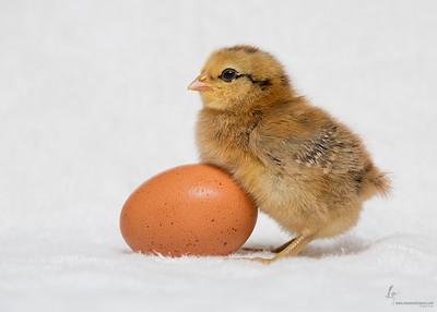 No NameEaster Egger