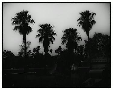 T2230 Palms