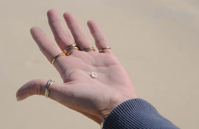 Tiny shell, Coopers Island