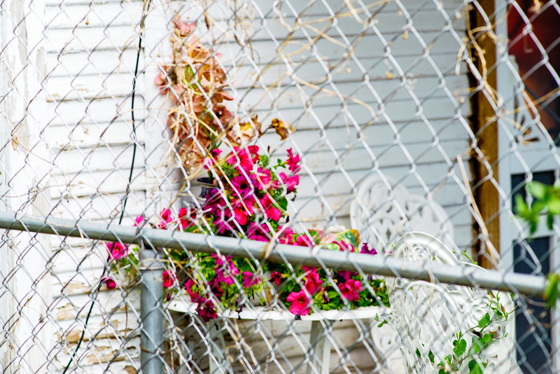 Chain link fence and flowers.