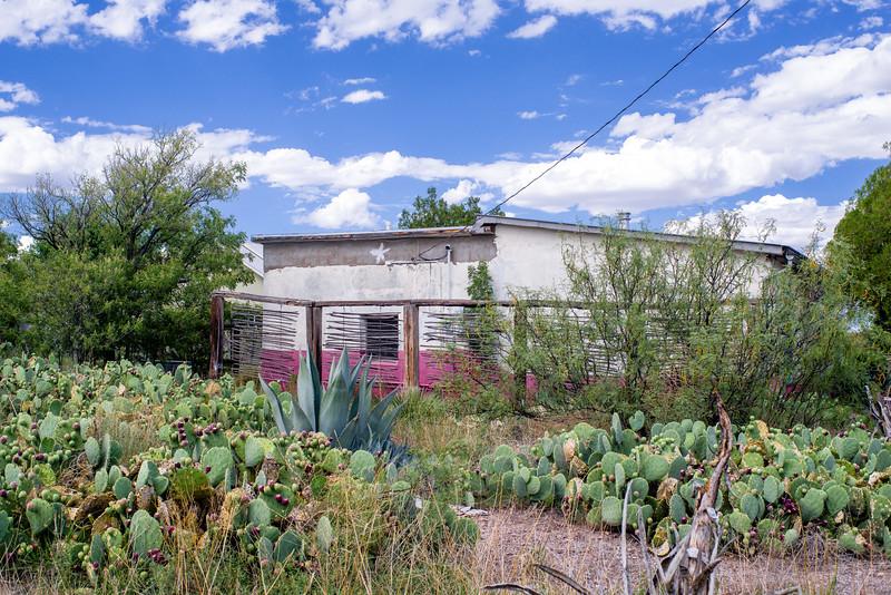 Cactus garden, Marfa, TX.