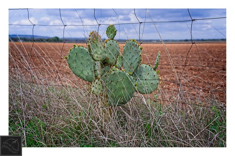 Cactus, fence and plowed field.
