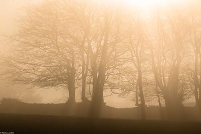 Fog vs Sun