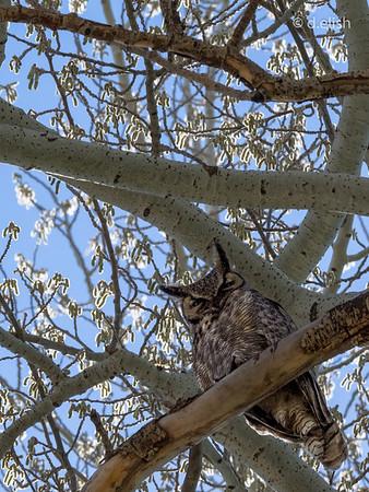 Evil Owl Eyes