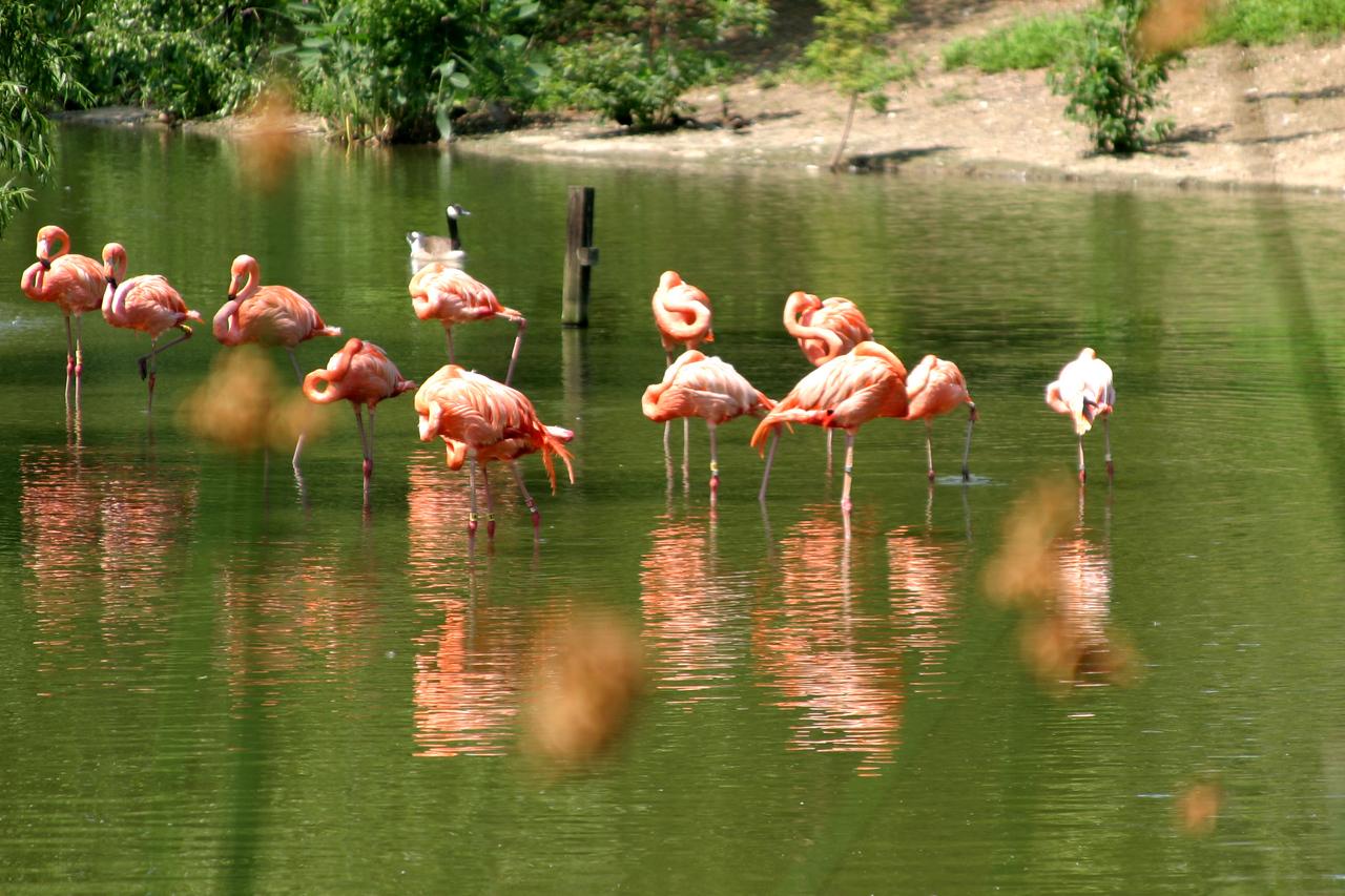 St. Louis Zoo, Forest Park, St. Louis, MO