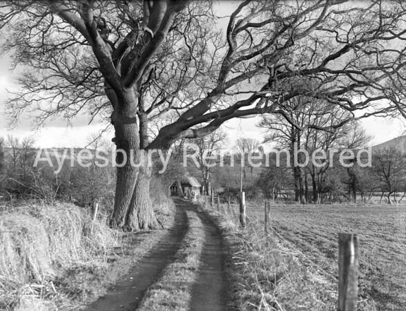 Lane to Bushey Leys Cottage, Little Kimble, Feb 21st 1949