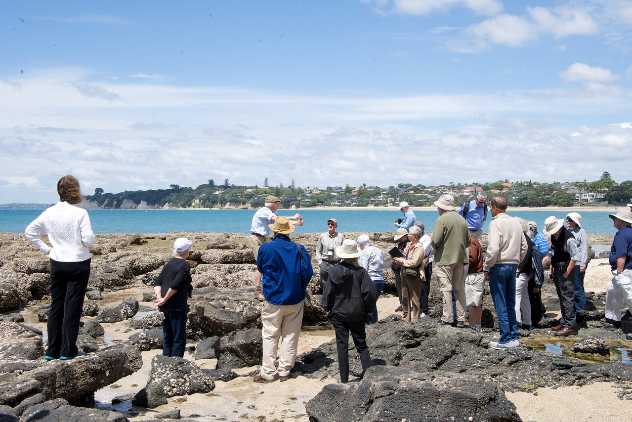 Takapuna Reef Fossil Forest