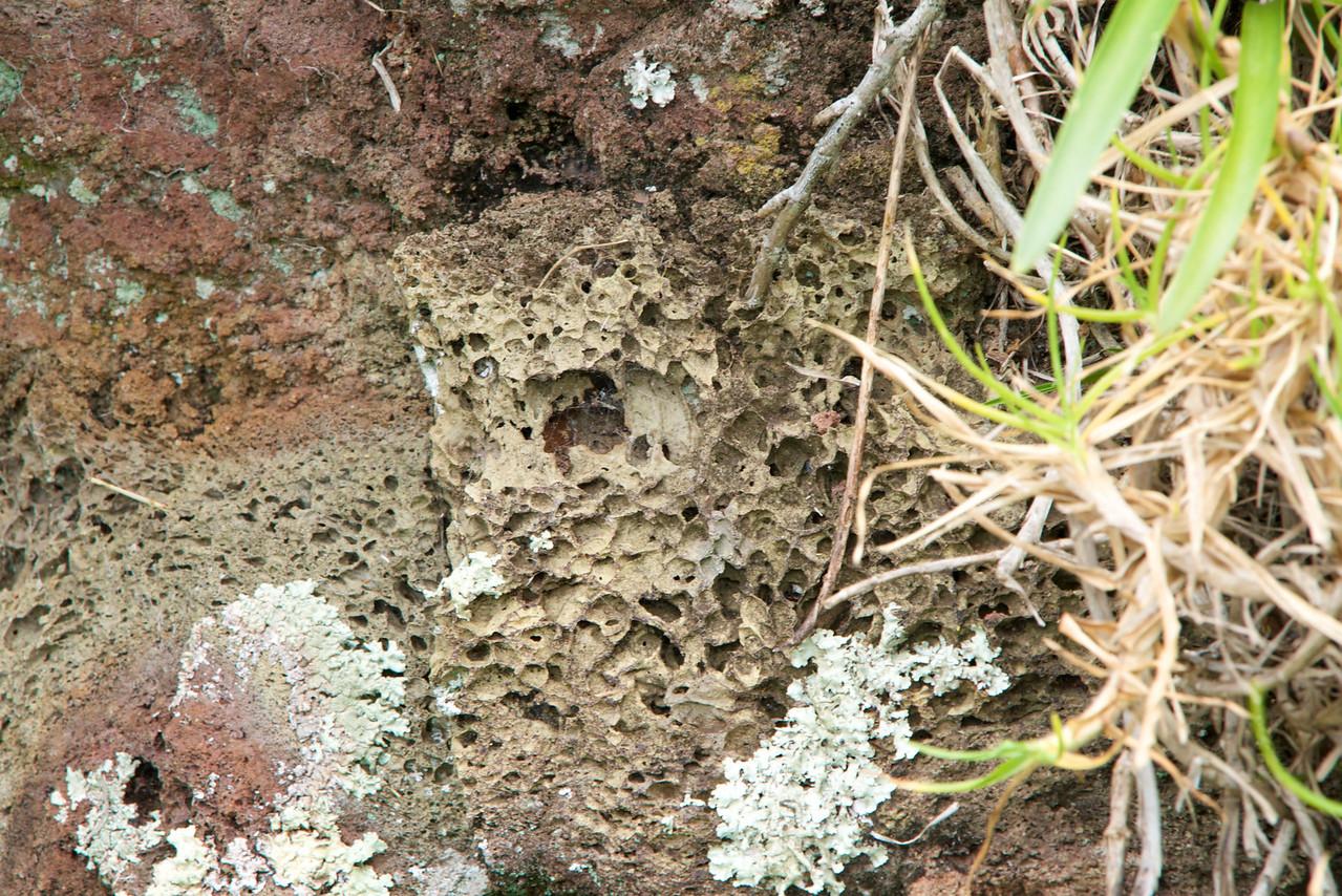 Scoria With Lichen (1-2 fungus and 1-2 algae-fungus shelters the algae and algae shelters the fungus)