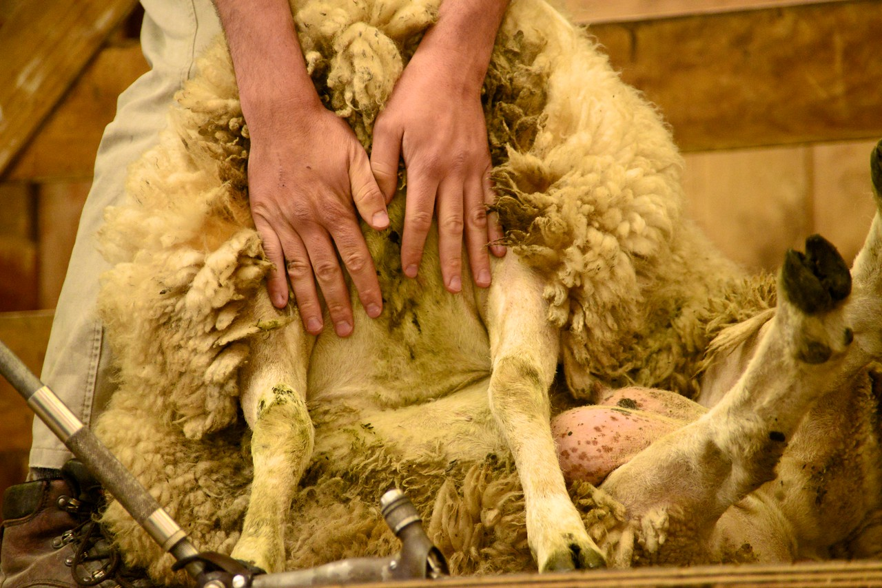 Areas of Sheep That Don't Need Shearing