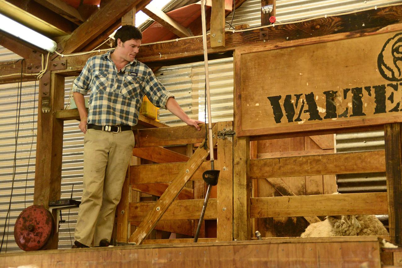 Explanation of History and Process of Shearing Sheep