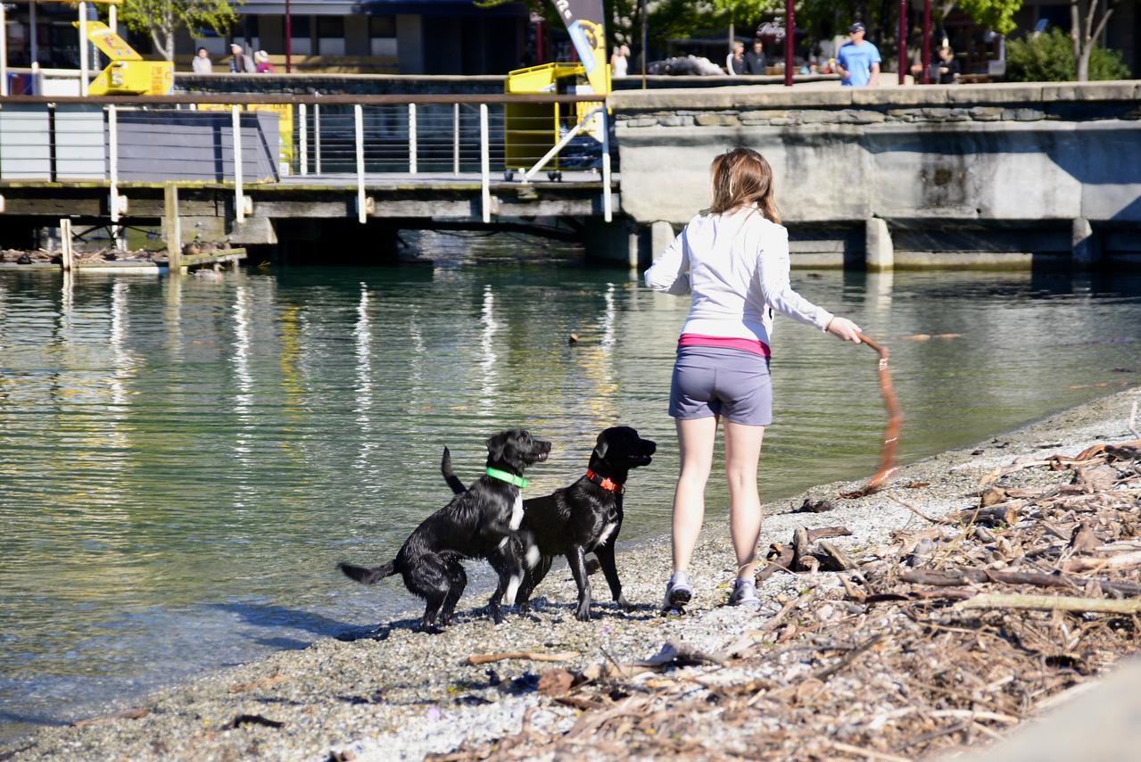Playing With The Dogs on Lake Wakatipu