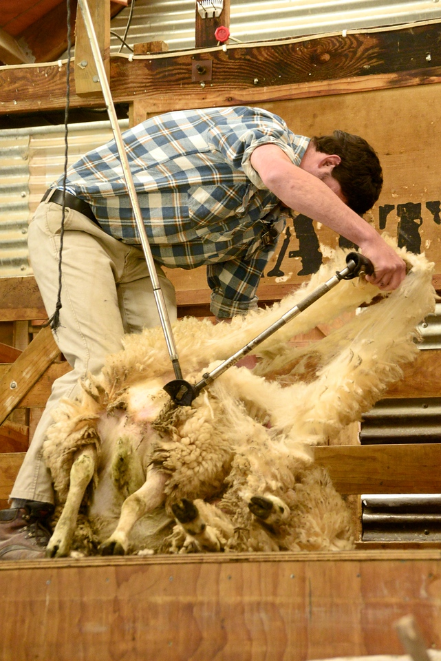 Ideally The Wool Is Kept Whole