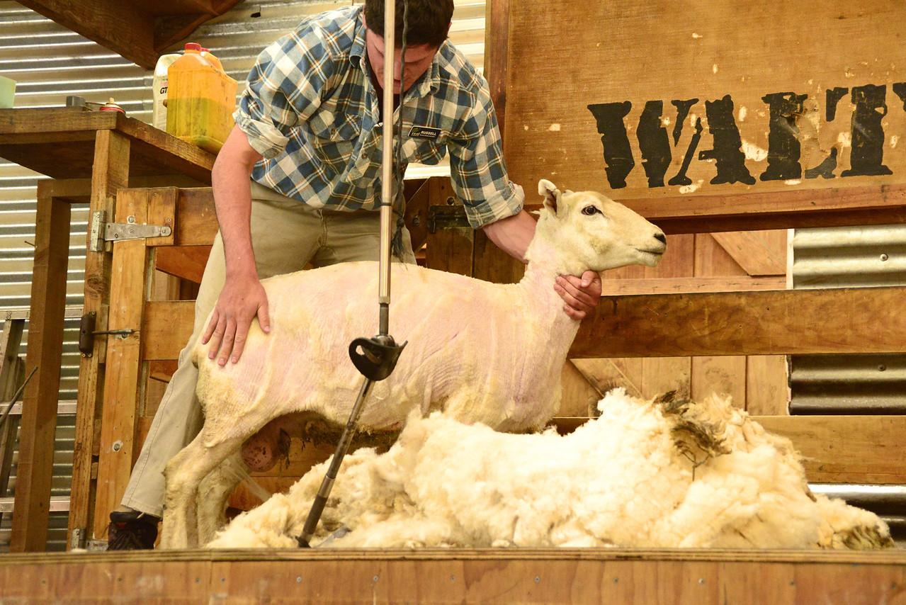 Naked Sheep
