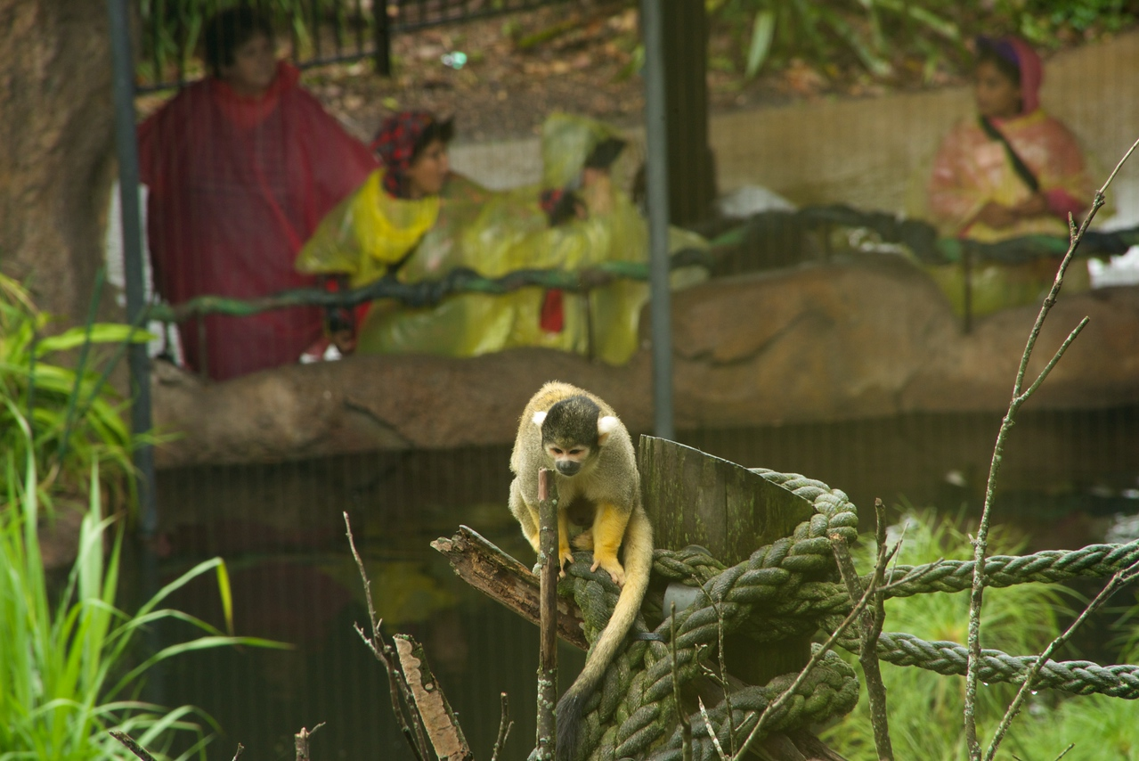 Squirrel Monkey (taken from inside)