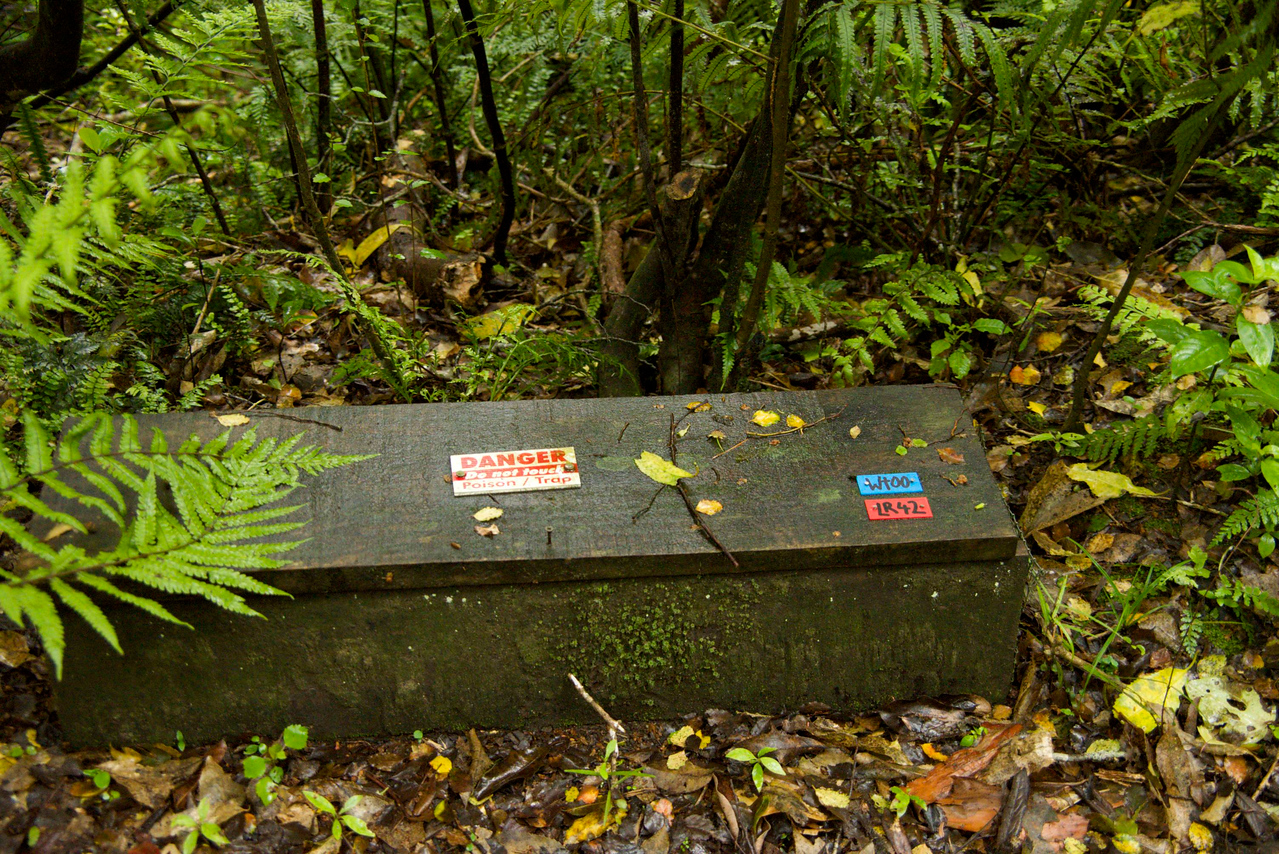 Poison Boxes All Along Trail-Method of Controlling The Rodent Population
