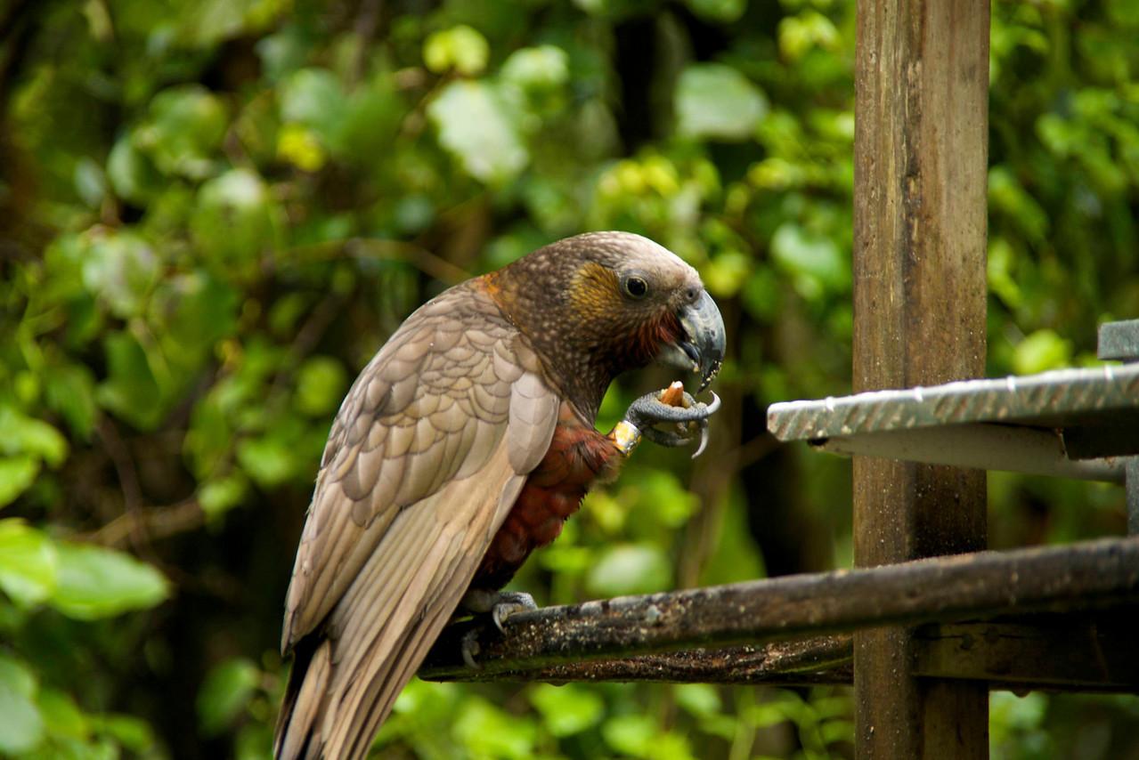 Kaka Eating