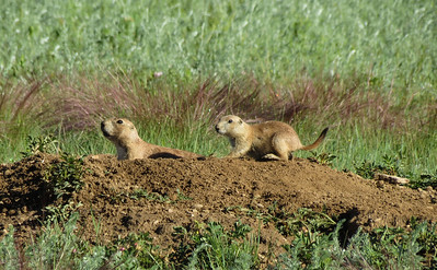 The hike goes thru a prairie dog town, so lots of critters were out.