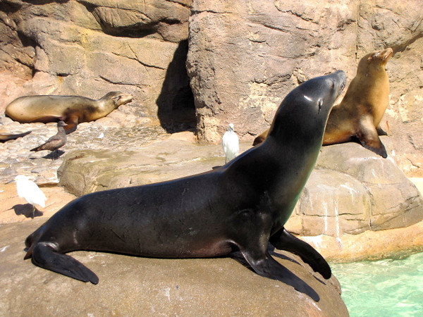 """There were a half dozen great shows we watched during our day at SeaWorld... the """"Sea Lions & Otter"""" show being one of them!"""