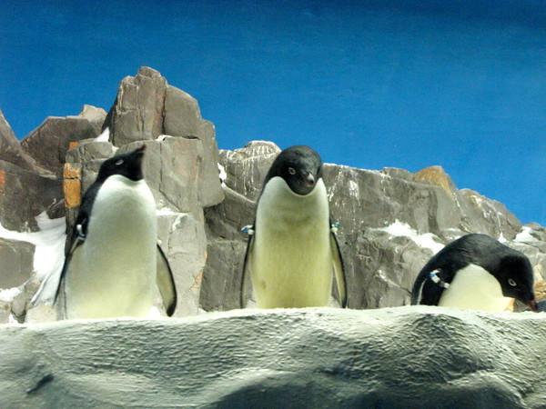 Penguins... cute!! :-)