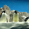 Penguins... cute!! :-)