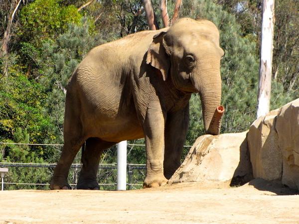 Elephants... amazing animals!