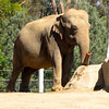 Elephants... amazing animals!