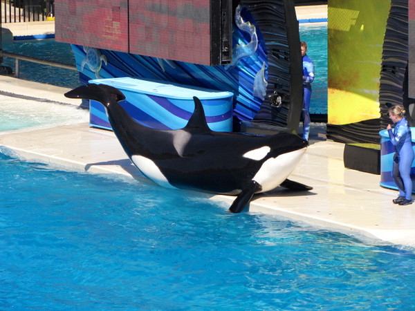 """But of course the """"Shamu"""" show was the # 1 highlight! :-)"""