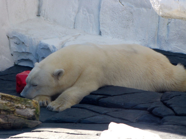 Seeing the Polar Bears was pretty cool too! :-)