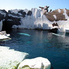 "Seeing the Beluga Whales in SeaWorld's ""Arctic"" region was pretty cool! :-)"