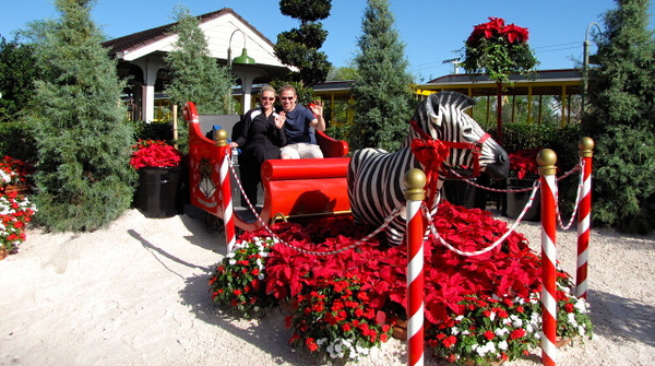 "As Christmas was just around the corner they had the park done up with lots of beautiful Christmas decorations like this ""Santa's Sleigh""... didn't know Zebras took over for Rudolph though! :-)"