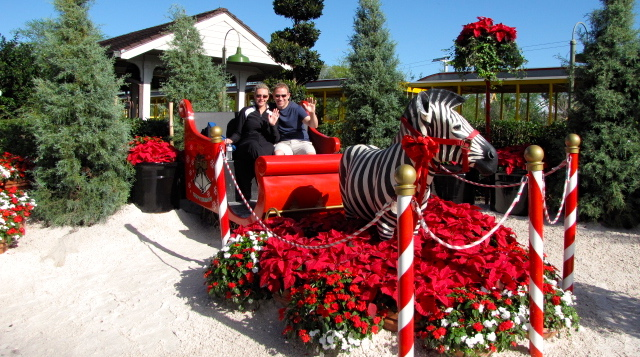 """As Christmas was just around the corner they had the park done up with lots of beautiful Christmas decorations like this """"Santa's Sleigh""""... didn't know Zebras took over for Rudolph though! :-)"""