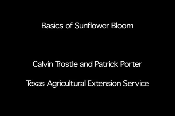 Estimating percent bloom in sunflower