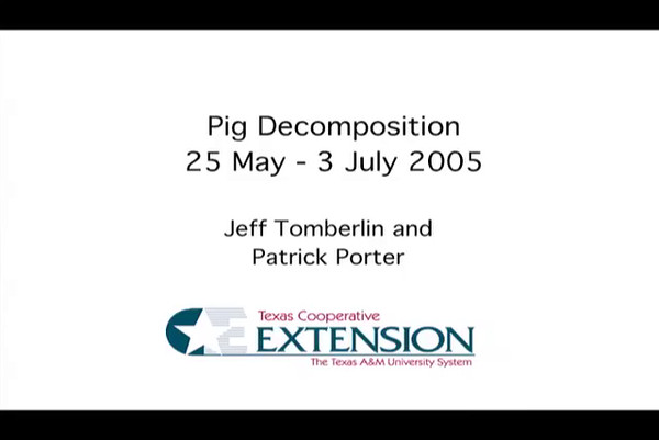 Pig decomposition, part of a forensic video project