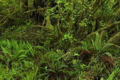 Ultra-thick Foliage