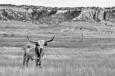 Longhorn Butte