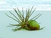 Sea pod, blue and green.  Vero Beach, Florida